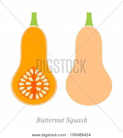 Butternut Squash Illustration