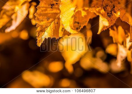 Autumn leaves in autumn colours and lights