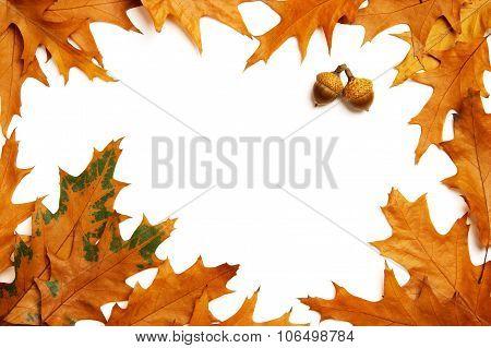 Oak Leaves Frame
