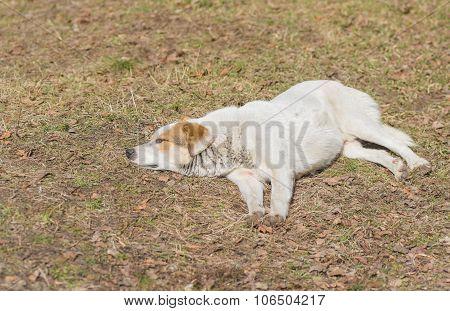 Stray dog having first spring siesta