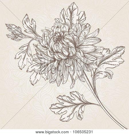 Flower Chrysanthemum