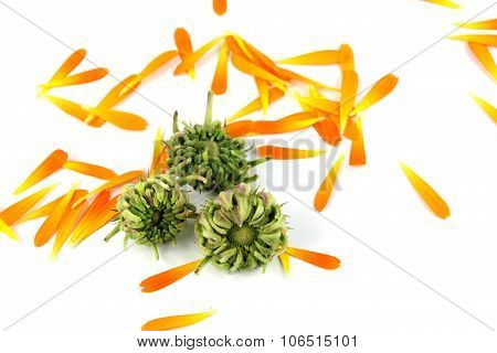 Calendula, Marigold Seeds On White Background