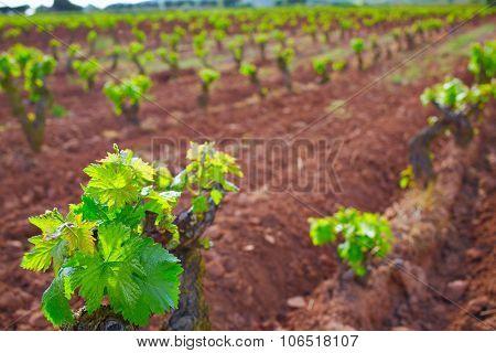La Rioja vineyard fields in The Way of Saint James