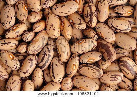 Raw Creamy Pinto Beans Pattern