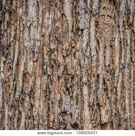 Close Up Shot Of Brown Tree Bark Texture.