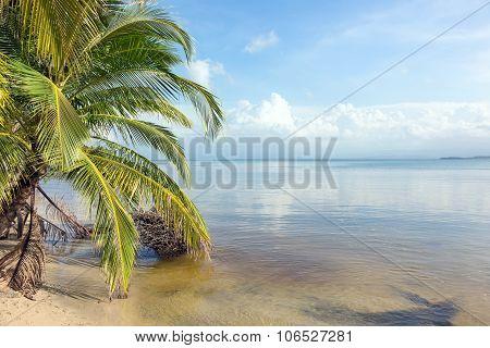 Tilted tree on the Caribbean coast