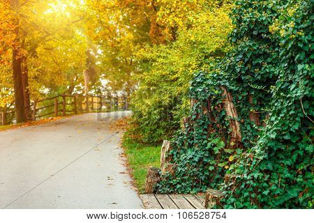 Track in autumnal park with sunny sunbeam landscape. Illustration