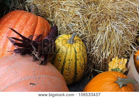 Indian Corn Pumpkin  Cabbage Hay Bale