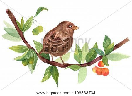 Vintage Watercolor Sparrow On Branch With Berries On White Background