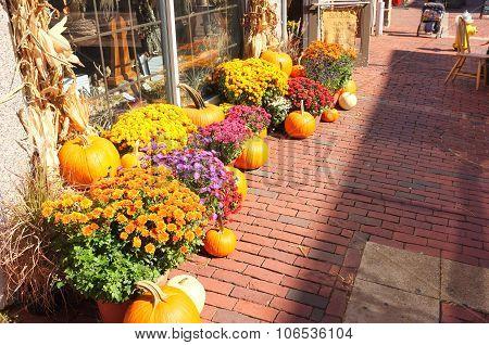 Pavement  Pumpkin Winter Squash Crop Harvest