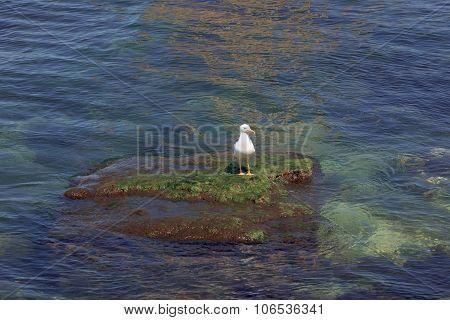 Seagull in the port of Sevastopol