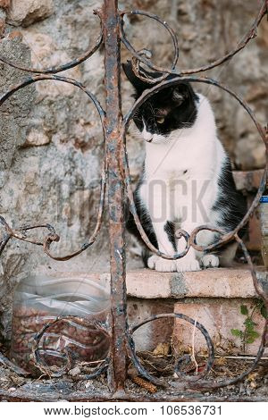 Mixed Breed Black and White Cat Outdoor