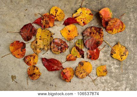 Fall Leaves Scattered On Concrete