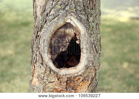 Tree hollow close up