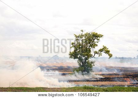 Fire Burn On The Dry Straw On Rice Field