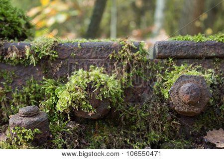 Moss On Railroad Track