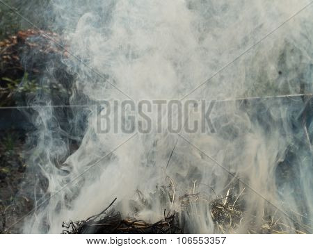 Fire, Fire, Smoke In The Autumn Forest