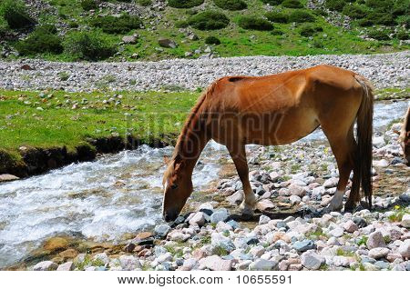 Horse and mountain river