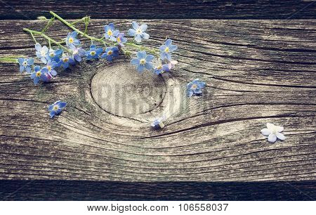 Forget-me-not flowers on wooden surface