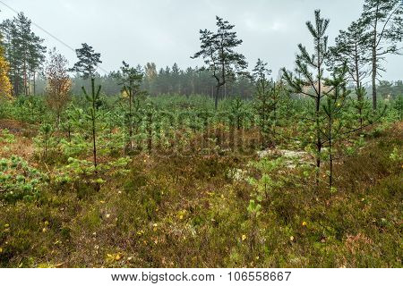 Young Trees In Forest