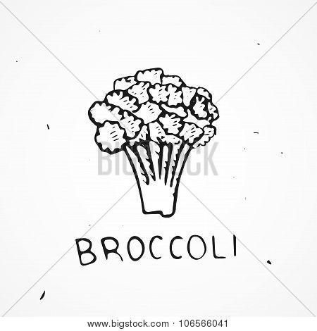 Hand Drawn Broccoli Vector