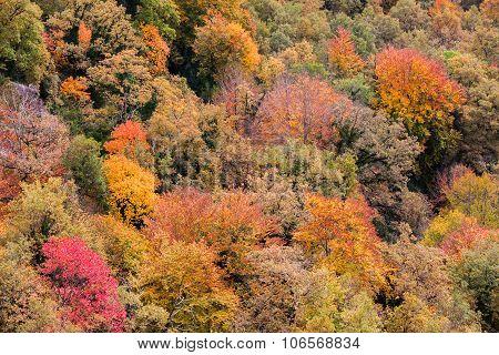 Autumn Forest Close Up In La Garrotxa, Catalonia