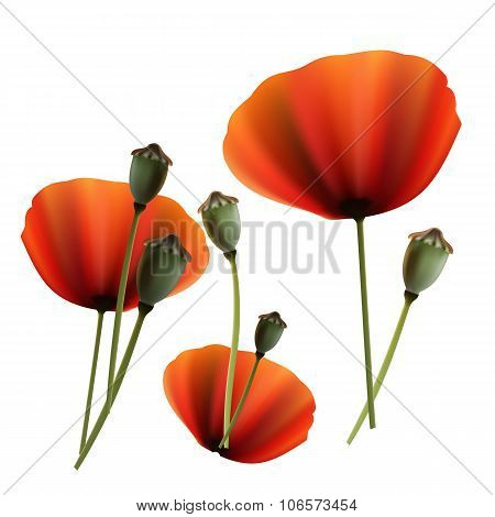 Set Of Poppy Green And Red Capsule On White Background
