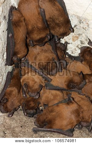 Bat Colony