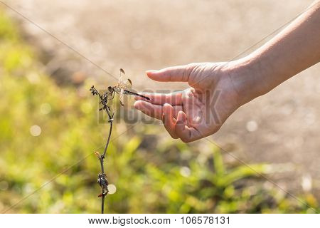 Girl Hand With Dragonfly