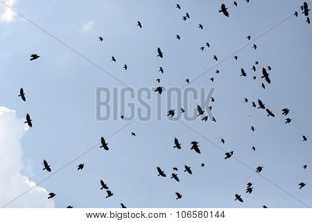 Group Of Ravens Flying In Sky