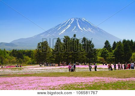 NASHIYAMA, JAPAN May 2015: People from Tokyo and other cities come to Mt. Fuji and enjoy the cherry