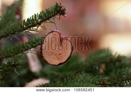 Dry Apple On Fir Tree