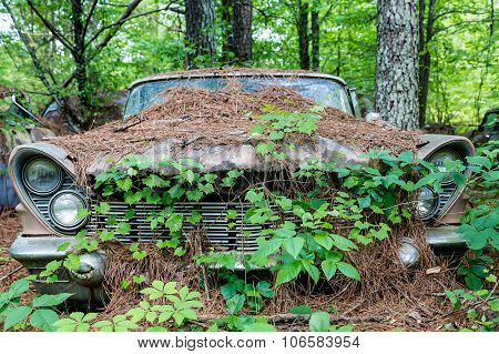 Old Car Covered In Vines And Pinestraw