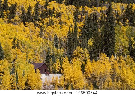 Golden Aspen Trees