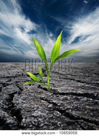 Planta verde suelo muertas a través
