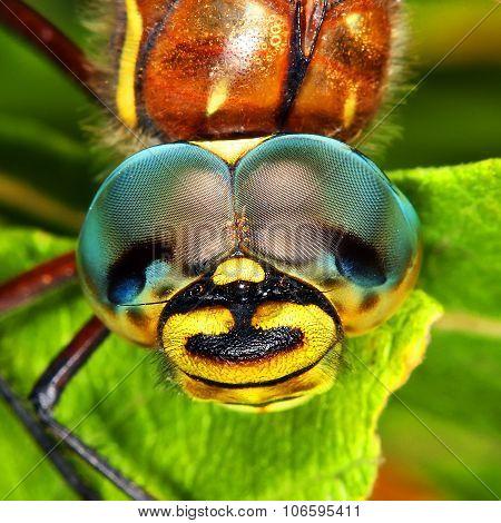 Looking dragonflies