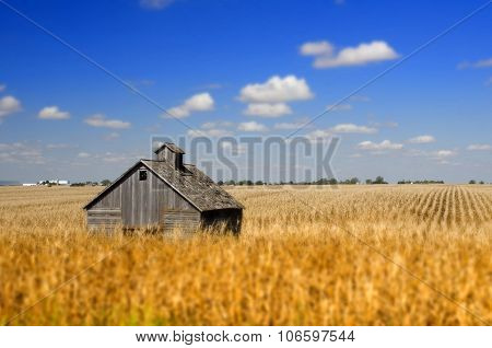 Barn in Iowa cornfield