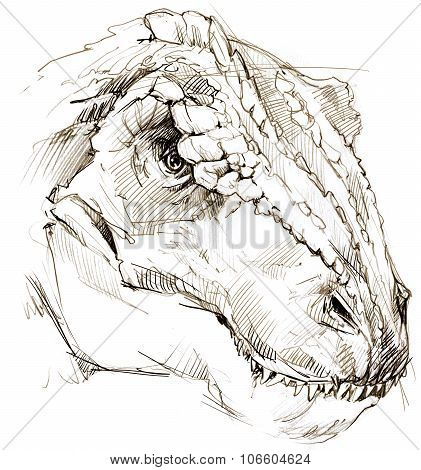 Dinosaur. dinosaur drawing pencil sketch