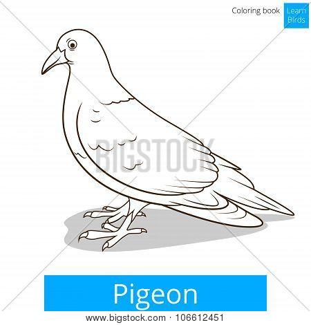 Pigeon learn birds educational game vector