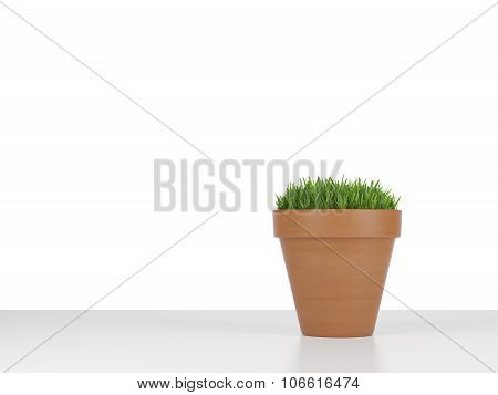 A Flowerpot With Green Grass. White Background.