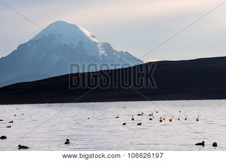 Snow Capped Stratovolcano Sajama Under The Lake Chungara