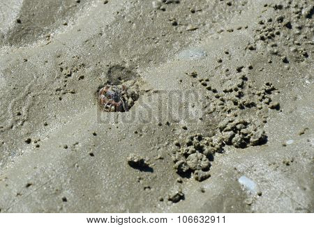 ghost crab digging on the sand