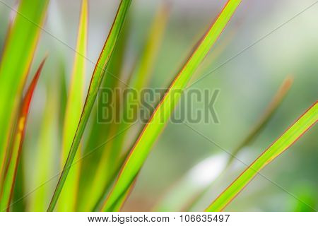 Abstract Green Plant Texture Blurred Lines