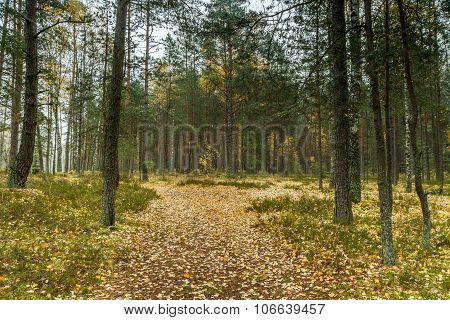 Path To The Woods