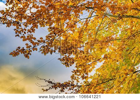 Autumn Tree With Yellow And Orange Leaves