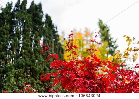 Autumn Trees With Red, Yellow And Orange Leaves