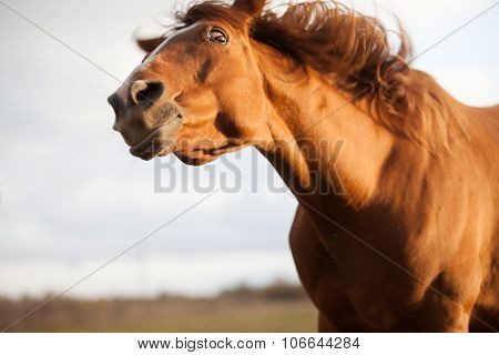 funny red horse, surprised by something, close-up, focus on eyes