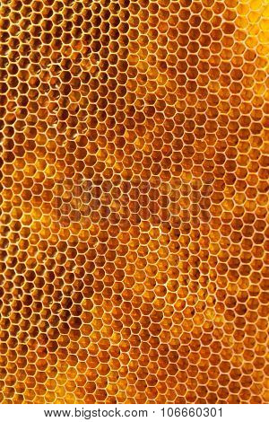 Bee Honeycombs With Honey Close Up, A Natural Background