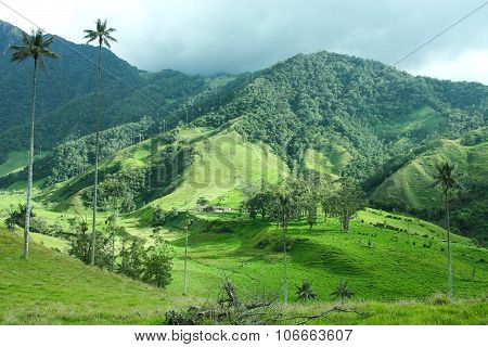 Cocora Valley.