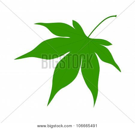 Green leaf on a white background.